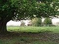 Horse chestnut tree, Collinsend Common - geograph.org.uk - 1149217.jpg