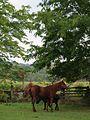 Horses, Puck's Farm (3985752056).jpg