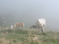 Horses grazing near Monte Monega.png