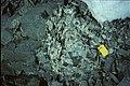 Horseshoe I Sally Cove mingled magma.jpg