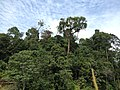 Hutan Alam Mandi Angin Minas Riau 03.jpg