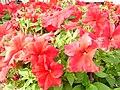 IMG 1129 Flowers.jpg