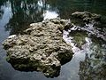 Ichetucknee Springs SP north springs stones01.jpg