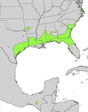 Ilex vomitoria - Image: Ilex vomitoria range map