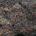 Ingvariella bispora 474108.jpg