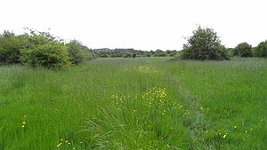 Islip Manor Meadows - Image: Islip Manor Meadows 6