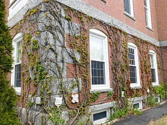 Bates College traditions - Ivy growing on the side of Hathorn Hall, featuring respective classes' Ivy Stones