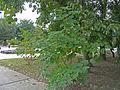 Izmail city garden 04.jpg