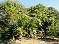 J. C. Raulston Arboretum - DSC06177.JPG
