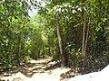 Jalan Kabupaten Riam Kalbar - panoramio.jpg