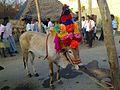 Jallikattu - Kadaladi Village 606 908.jpg