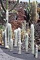 Jardín de Cactus - Lanzarote - J06.jpg