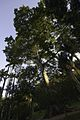 Jardim Botânico do Rio de Janeiro - 130715-6509-jikatu (9311387188).jpg