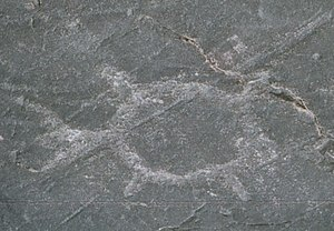 Jeffers Petroglyphs -  A turtle