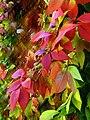 Jesenje boje.jpg