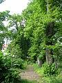 Juedischer Friedhof Waehring - Hauptallee.jpg