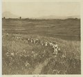 KITLV - 26890 - Kleingrothe, C.J. - Medan - Expedition, Batak - circa 1905.tif
