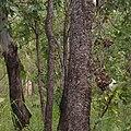 Kakadu National Park-9 (8308702615).jpg