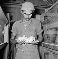 Kalkoenfokkerij in Beit Herut Werknemer met kalkoenkuikens op de hand bij een …, Bestanddeelnr 255-4613.jpg
