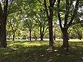 Kanagawa park.jpg