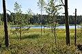 Kangaru ezers, Ropažu pagasts, Ropažu novads, Latvia - panoramio (3).jpg