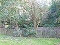 Kasteel Coninxdonck tuin.JPG