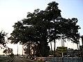 Katwa to Ahmedpur Narrow gaugue railway 01.jpg