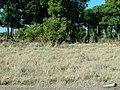 Keekorok 2013 - panoramio (12).jpg