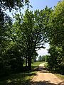 Keliukas link Veprių - panoramio.jpg