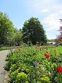 Keukenhof Garden (57).JPG