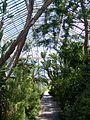 Kew Garden Temperate House (3656937526).jpg