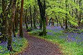 Killinthomas Woods (153220189).jpeg