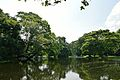 Kings Lake - Indian Botanic Garden - Howrah 2012-09-20 0075.JPG