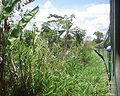 Kinshasa Matadi.jpg
