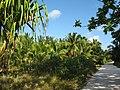 Kiribati(105).JPG
