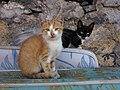 Kittens on Mattresses.JPG