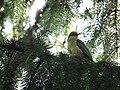 Kleiner Vogel.JPG