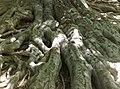 Kořeny 2 - panoramio.jpg