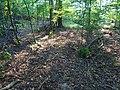 Kohlberg Pirna - panoramio (4).jpg