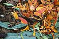 Kompost-zoom 01.jpg