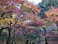 Komyozenji Temple November 2012 04.jpg