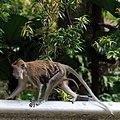 Kuala Lumpur Malaysia Monkey-with-baby-01.jpg