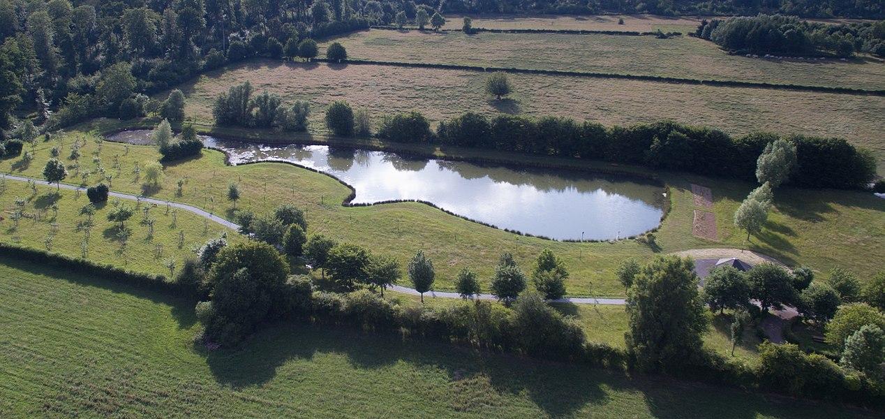 L'étang de la Pâture, Locquignol, Forêt de Mormal, Avesnois
