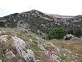 L'Estaque - Chemin de la Nerthe - Colline.jpg