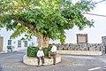 La Acacia de Benitagla.jpg