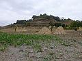 Lac Haïk-Ethiopie-Sorgho (2).jpg