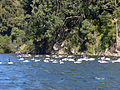 Laguna grande cisnes.jpg