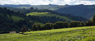 Iringa Region - The Tea fields in Mufindi.