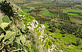 Landscape prickly pears Phaistos.jpg