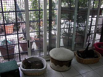 Largo di Torre Argentina cat shelter 2.jpg